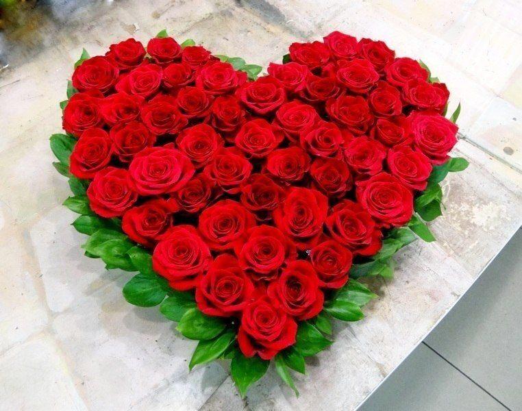 цветы картинки розы фото